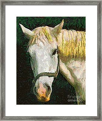 Study Of The Horse's Head Framed Print by Dragica  Micki Fortuna