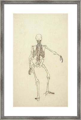 Study Of The Human Figure, Posterior View, From A Comparative Anatomical Exposition Framed Print by George Stubbs