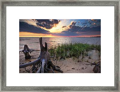 Stumps And Sunset On Oyster Bay Framed Print by Michael Thomas