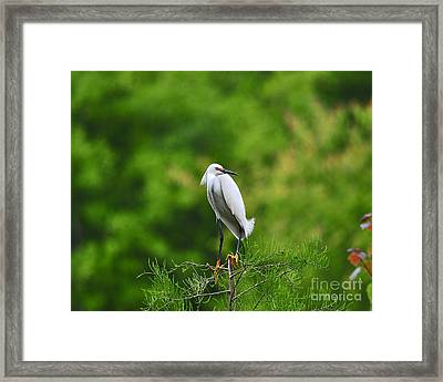 Stunning Snowy Framed Print by Al Powell Photography USA