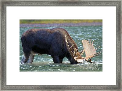 Submerged Framed Print by Adam Jewell