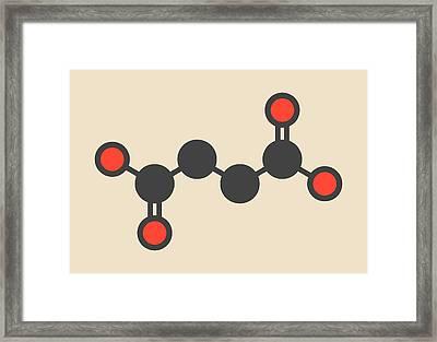 Succinic Acid Molecule Framed Print by Molekuul