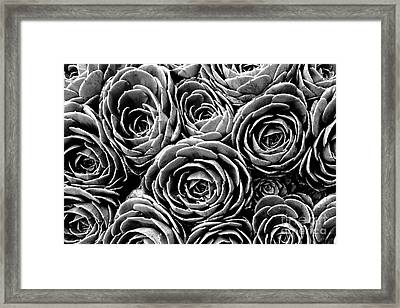 Succulent Circles Framed Print by James Brunker