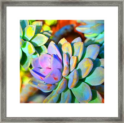 Succulent Color - Botanical Art By Sharon Cummings Framed Print by Sharon Cummings