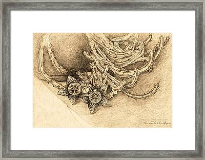 Succulent Flowers Framed Print by Judith Chantler