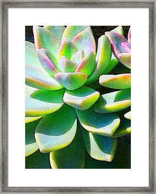 Succulent - Plant Art By Sharon Cummings Framed Print by Sharon Cummings