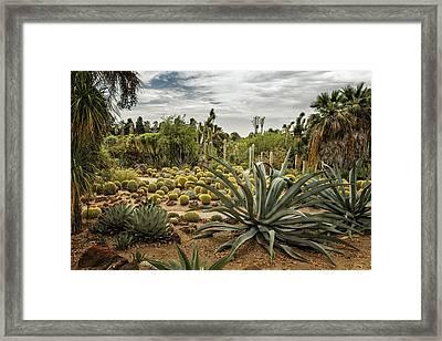 Succulents At Huntington Desert Garden No. 3 Framed Print by Belinda Greb