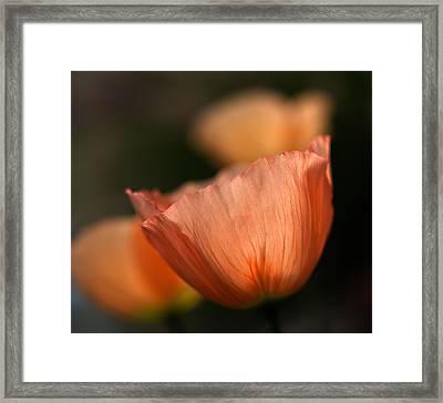 Suenos De Flores Framed Print by Joe Schofield
