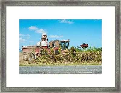 Sugar Cane Being Harvested, Lower Framed Print by Panoramic Images