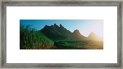 Sugar Cane Crop In A Field, Trois Framed Print by Panoramic Images