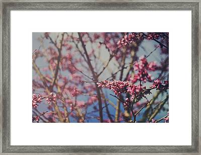Sugar Framed Print by Laurie Search