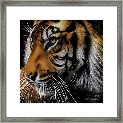 Sumatran Tiger Profile Framed Print by Jurek Zamoyski