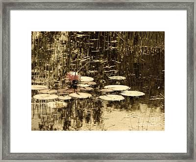 Summer Afternoon Framed Print by Marcia Lee Jones