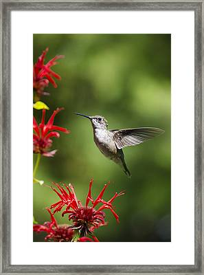 Summer Beauty Framed Print by Christina Rollo