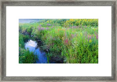 Summer Bouquet Framed Print by Bill Wakeley
