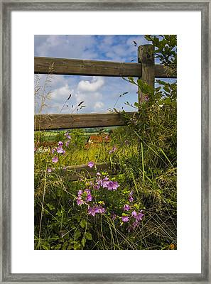 Summer Breeze Framed Print by Debra and Dave Vanderlaan