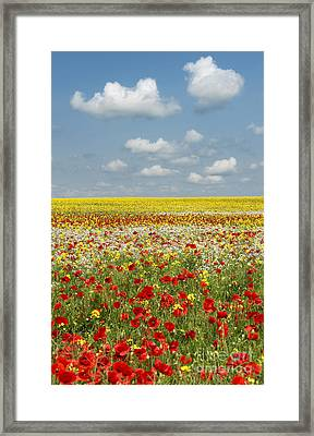 Summer Colours Framed Print by Tim Gainey