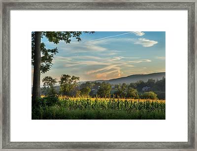 Summer Corn Framed Print by Bill Wakeley