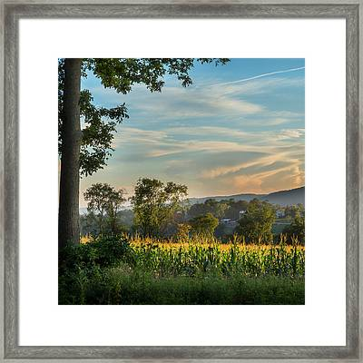 Summer Corn Square Framed Print by Bill Wakeley