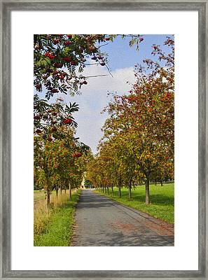 Summer Day In The Country Framed Print by Aged Pixel