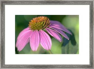 Summer Days End Framed Print by Heidi Smith