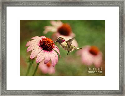 Summer Delight Framed Print by Darren Fisher