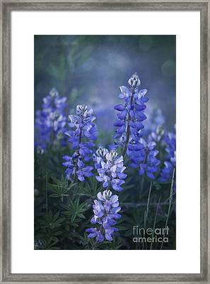 Summer Dream Framed Print by Priska Wettstein