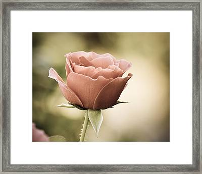 Summer Fades Framed Print by Mary Zeman