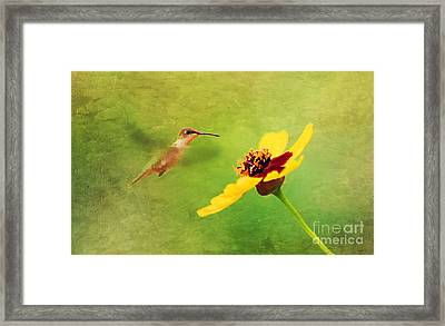 Summer Flight Framed Print by Darren Fisher