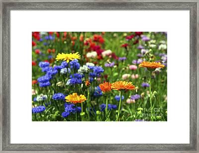 Summer Flowers Framed Print by Elena Elisseeva