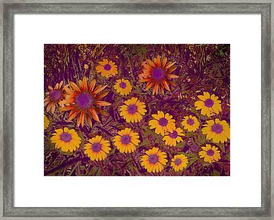 Summer Garden Framed Print by Ann Powell