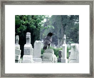 Summer Graveyard Framed Print by Gothicolors Donna Snyder