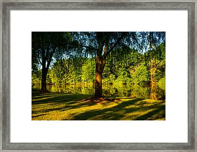 Summer Light Framed Print by Karol Livote