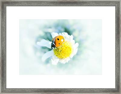 Summer Light Framed Print by Marianna Mills