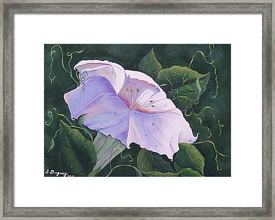 Summer Lily Framed Print by Sharon Duguay