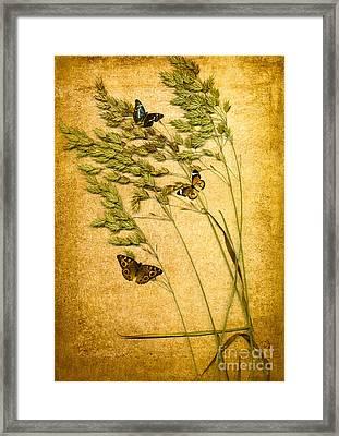Summer Meadow Framed Print by Jan Bickerton
