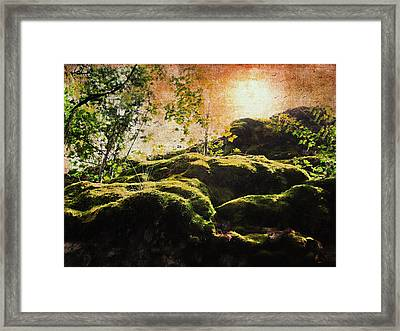 Summer Moss Framed Print by Kathy Bassett
