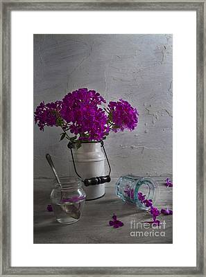 Summer Phlox Framed Print by Elena Nosyreva
