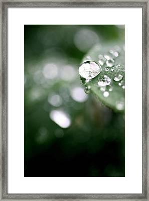 Summer Rain Framed Print by AR Annahita
