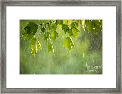 Summer Shower Framed Print by Diane Diederich