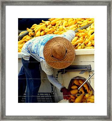Summer Squash Framed Print by Karen Wiles