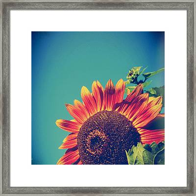 Summer Sunflower Framed Print by Joy StClaire