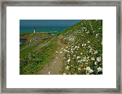 Summer Time At Yaquina Head Framed Print by Nick  Boren