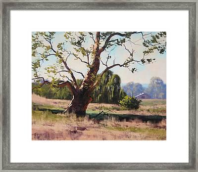 Summer Willow Framed Print by Graham Gercken