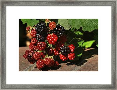 Summer's Bounty Framed Print by Donna Kennedy