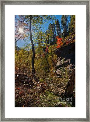 Sun And  The Tree Framed Print by Brian Lambert
