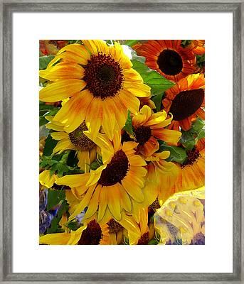 Sun Fall Framed Print by Kathy Bassett