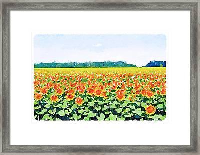 Sun Flower Landscape Framed Print by Yury Malkov