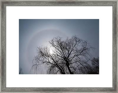 Sun Halo Bare Trees And Silver Gray Winter Sky Framed Print by Georgia Mizuleva