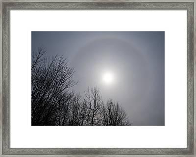Sun Halo Through The Trees Framed Print by Georgia Mizuleva